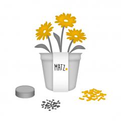 Anzuchtsets (Blumen) MY MATZ